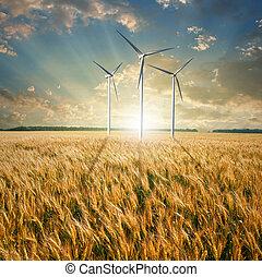 turbiny, pszenica, wiatr, generatory, pole
