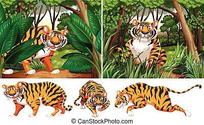 tygrysy, las, głęboki