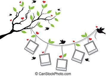 układa, fotografia, drzewo, ptaszki