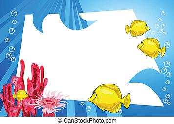underwater życie