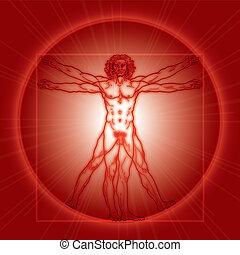 vitruvian, vitruviano)., version., (homo, czerwony, człowiek