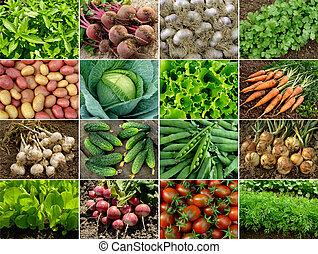 warzywa, ziele