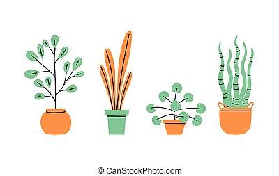 wazony, dom, vases., kwiaty, rośliny, collection.