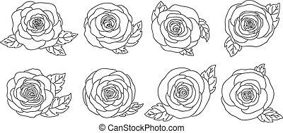 wektor, białe kwiecie, projektować, ilustracja, odizolowany, tło, róża