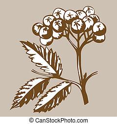 wektor, brunatne tło, rowanberry, ilustracja