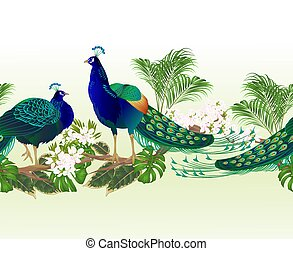 wektor, brzeg, egzotyczne kwiecie, tropikalny, pawie, ptaszki