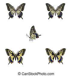 wektor, butterfly., ilustracja