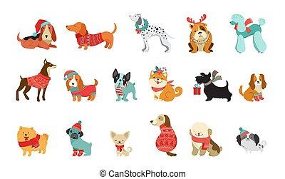 wektor, graficzny, pieszczochy, swetry, sprytny, szaliki, podobny, boże narodzenie, psy, ilustracje, przybory, elementy, wesoły, zbiór, kapelusze, trykotowy