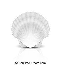 wektor, ikona, przód, odizolowany, closeup, biały, realistyczny, zamknięty, 3d, template., prospekt, tło., perła, seashell, muszelka, projektować