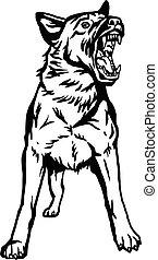 wektor, ilustracja, niemiec, agresywny, pies, odizolowany, tło, -, biały, atak, pasterz