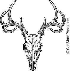 wektor, jeleń, czaszka