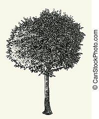 wektor, krótkotrwały, wizerunek, drzewo