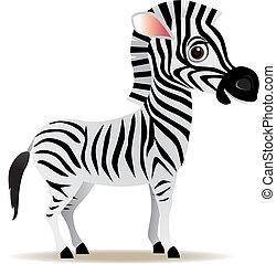 wektor, zebra, rysunek