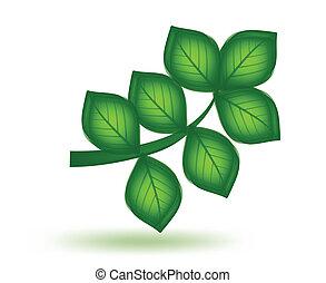 wektor, zielony, leaf.