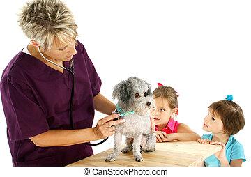 weteran, pies, dzieci