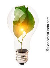 wewnątrz w domu lightbulb, rozwój, roślina