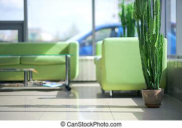 wewnętrzny, sofy, zielony, dwa, wygodny