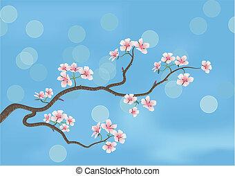 wiśniowe drzewo, japończyk