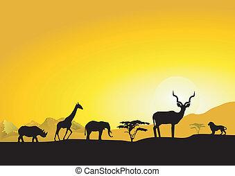 wieczorny, afryka