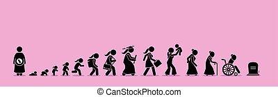 wiek, życie, process., samica, cykl