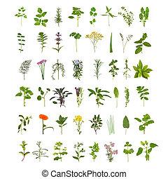 wielki, ziele, kwiat, liść, zbiór