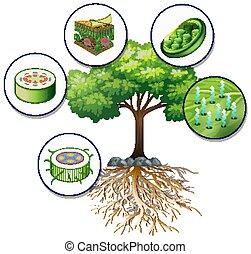 wielkie drzewo, komórki, roślina, zielony, zamknięcie