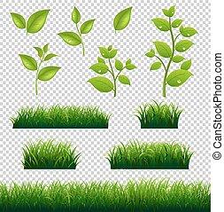 wielkie listowie, komplet, zielona trawa