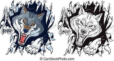 wilk, gniewny, świetny, tło, poza