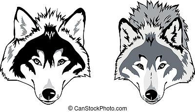 wilk, wektor, głowa