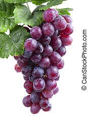 winogrono, odizolowany, czerwone wino