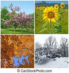winter., wiosna, jesień, cztery, seasons., lato