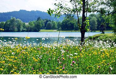 wiosna, łąka