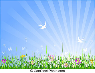 wiosna, łąka, tło