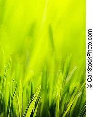 wiosna, abstrakcyjny, zielone tło, natura