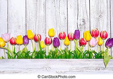 wiosna, barwny, tulipany