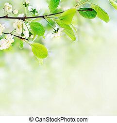 wiosna, białe kwiecie, drzewo gałąź