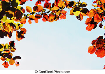 wiosna, burgund, liście