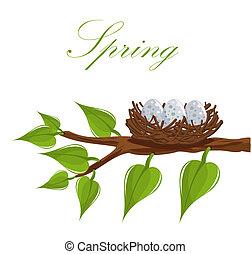 wiosna, gniazdo