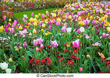 wiosna, ogród, kwiaty, barwny, lato