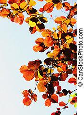 wiosna, olcha, liście