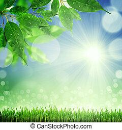wiosna, tło, natura