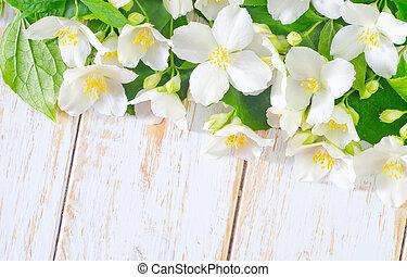 wiosna, ułożyć, jaśmin, tło, białe kwiecie