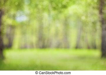 wiosna, zamazany, zielony, defocused, tło, albo, las