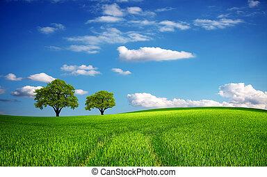 wiosna, zielone pole