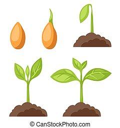 wizerunek, growth., fazy, chorągwie, roślina, umiejscowienia, komplet, sieć, ilustracje, projekty