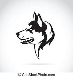 wizerunek, pies, syberyjski, wektor, tło, plewiasty, biały