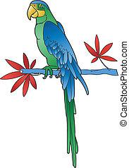 wizerunek, wektor, papuga