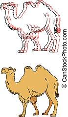 wizerunek, wektor, wielbłąd
