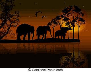 woda, afryka, sylwetka, słonie
