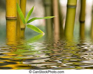 woda, bambus, odbicie